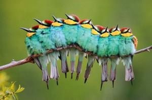bird-caterpillar-jose-luis-rodriguez