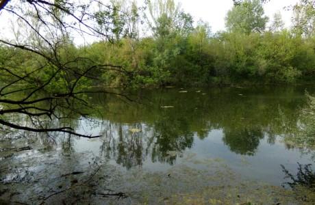 Starița Potcoava